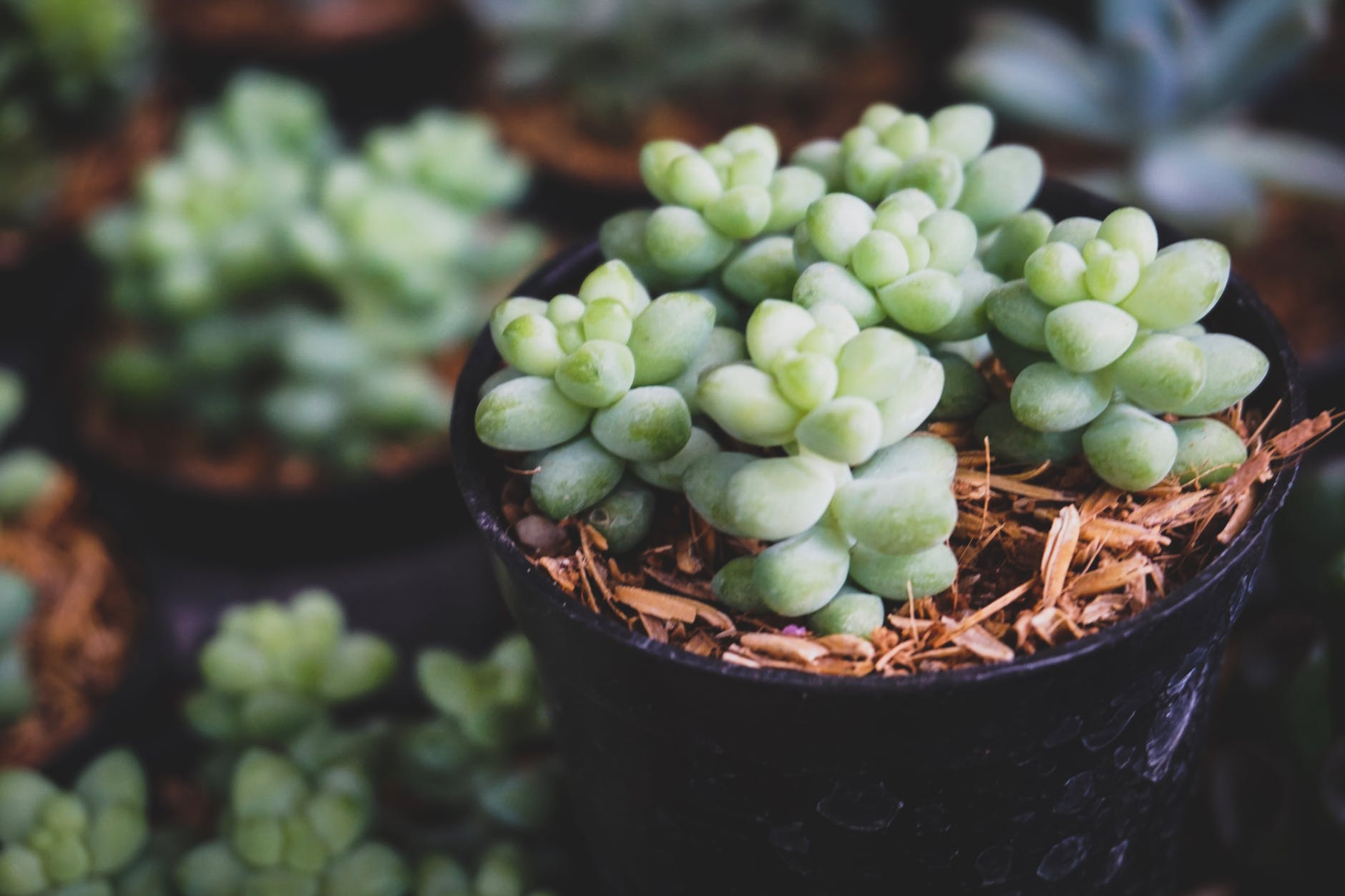 shallow focus photo of green succulent plants