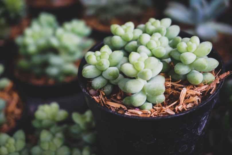 shallow focus photo of green succulent plants